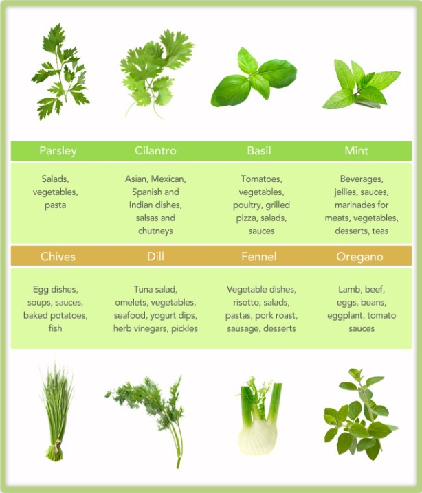 Leaf Relief: 8 Awesome Herbs For Your Kitchen